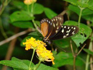 Butterfly Garden - 1