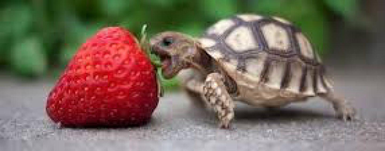 Proceder con cuidado ~ Protección de las Tortugas