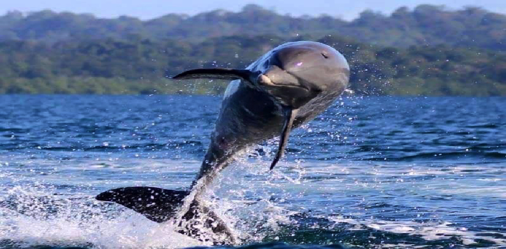 Bahia de los Delfines     photo by Steve Jacoby