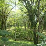 34 beautiful acres located in tierra oscura