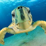 Help Bocas to protect our dear friend: the turtle!