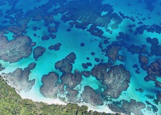 19 razones por las que el distanciamiento socialmente es mejor en Bocas del Toro